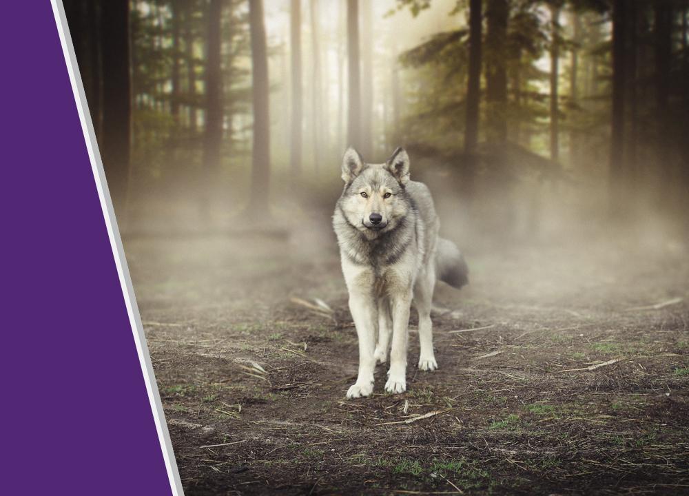STRATIX Blog - On-Board Wolves